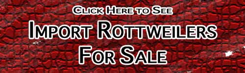 Import Rottweilers For sale